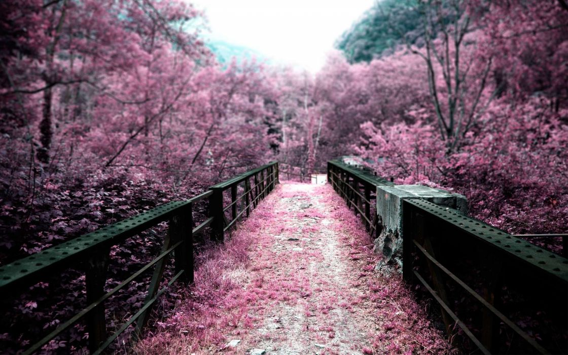 Cherry blossoms bridges depth of field selective coloring pink flowers wallpaper