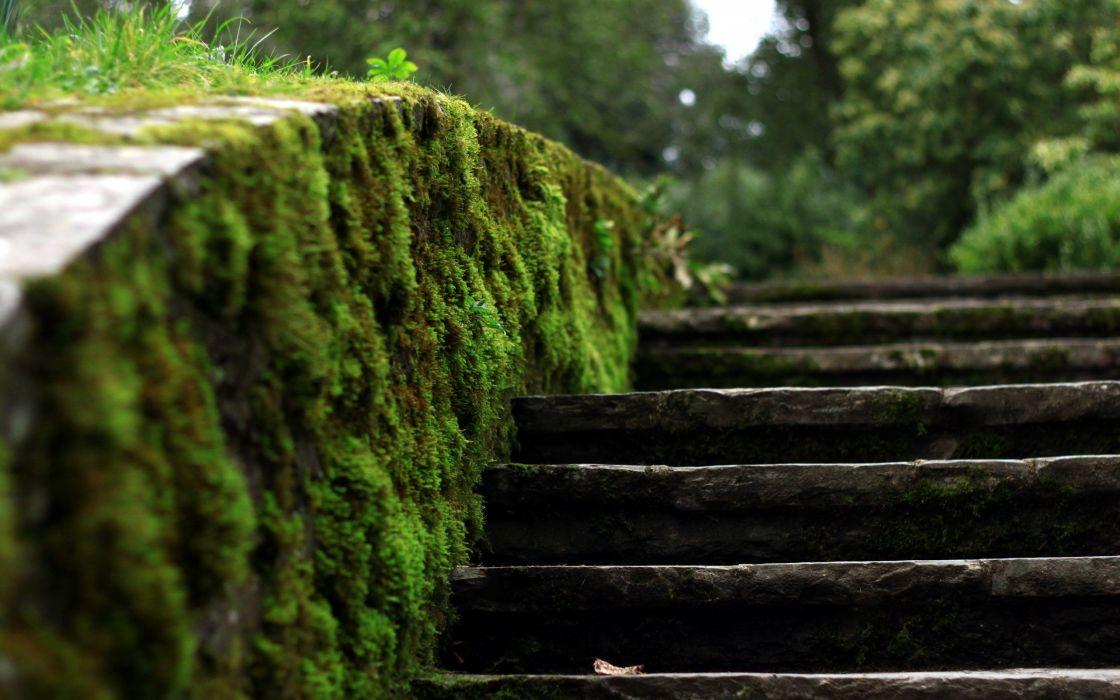 Stairways moss wallpaper