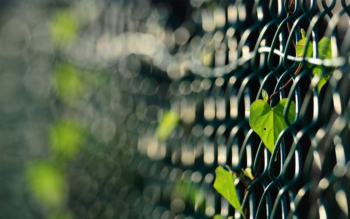 Fences leaves macro depth of field chain link fence wallpaper