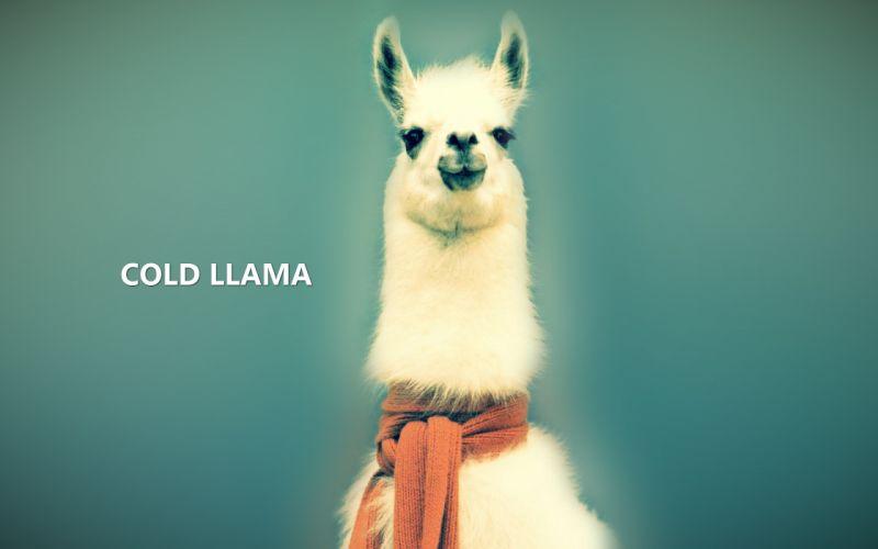 Cold deviantart llama wallpaper