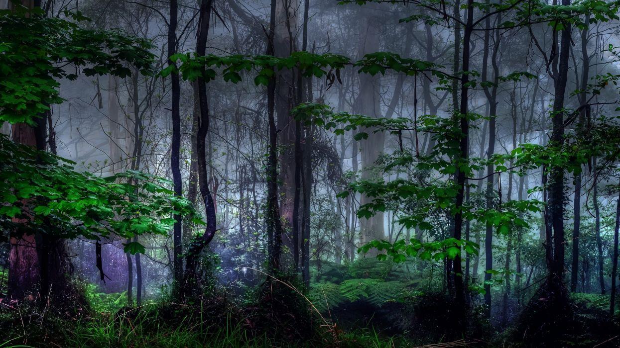 Nature trees dark forest mist wallpaper