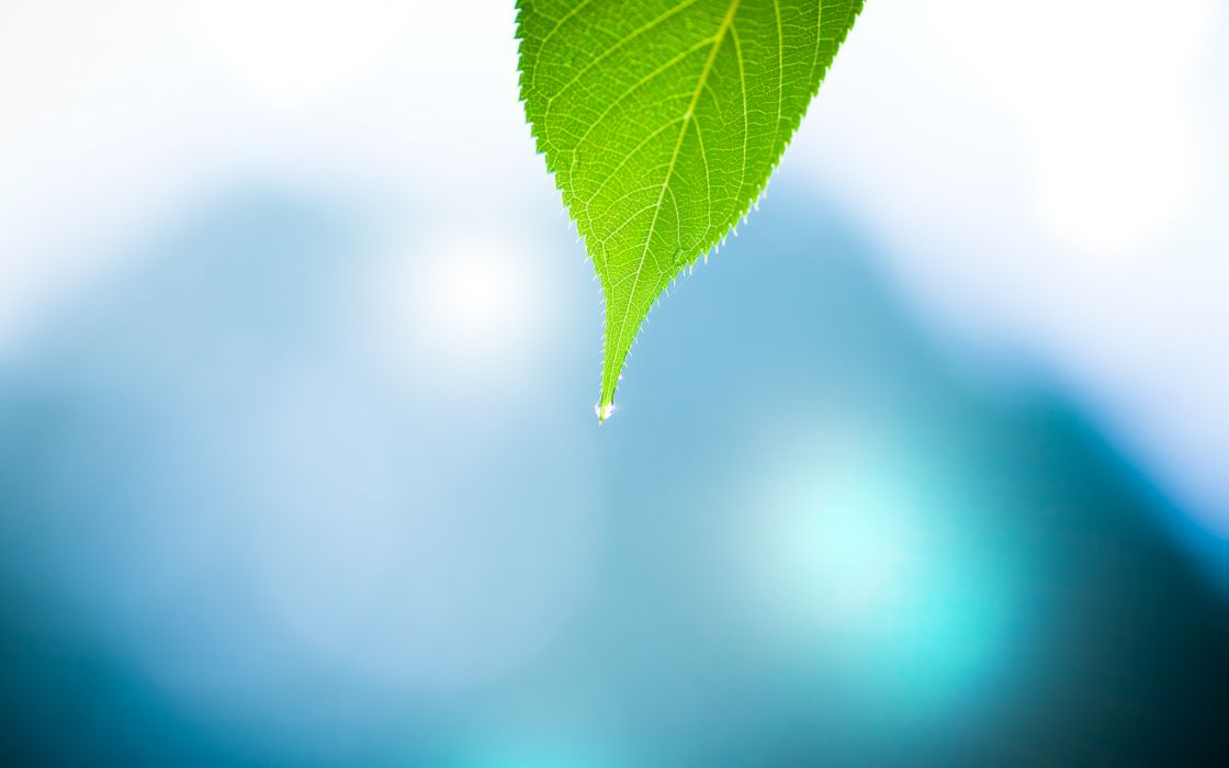 Water nature leaf minimalistic water drops macro depth of field wallpaper