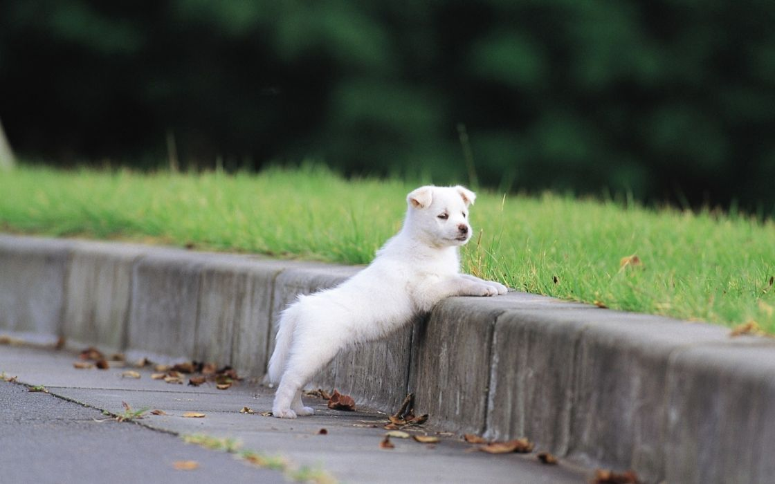 Landscapes animals grass dogs puppies sidewalks wallpaper