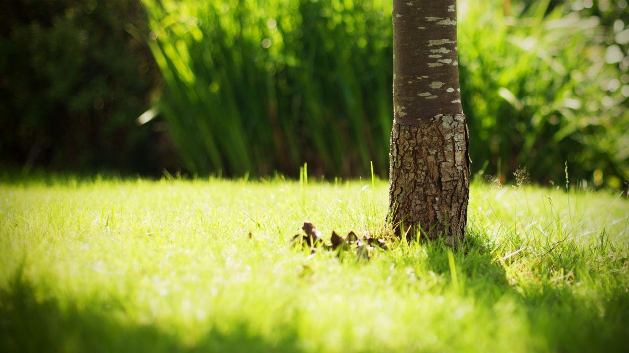 Green nature grass tree trunk wallpaper