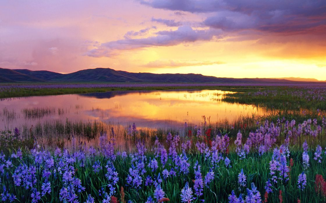 Sunset mountains clouds landscapes flowers meadow swamp wallpaper