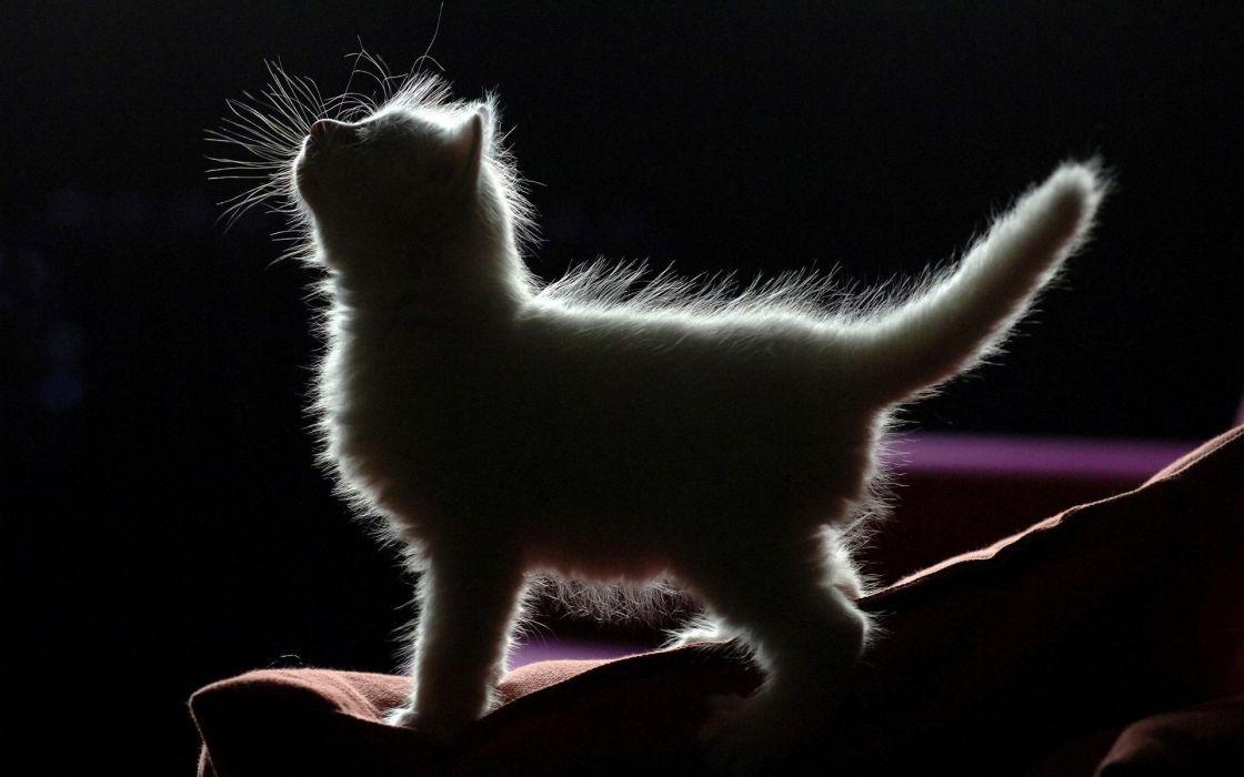 Cats shadows wallpaper