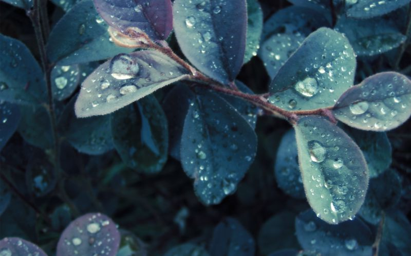 Nature leaves plants water drops wallpaper
