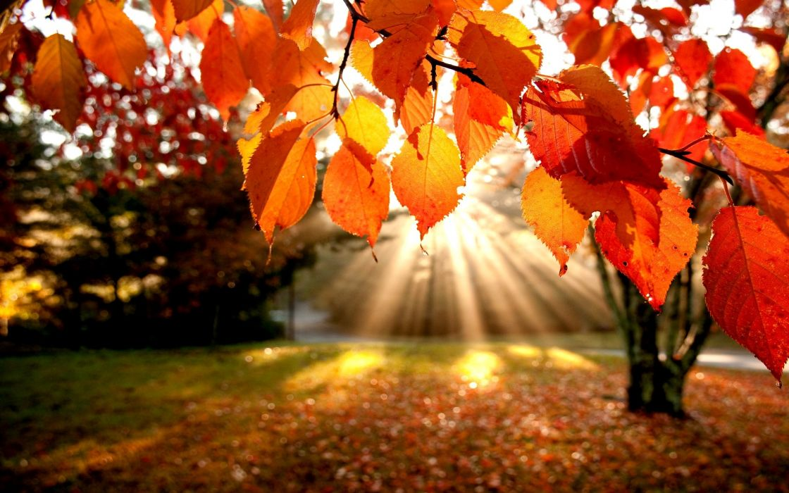 Landscapes nature trees autumn leaves wallpaper