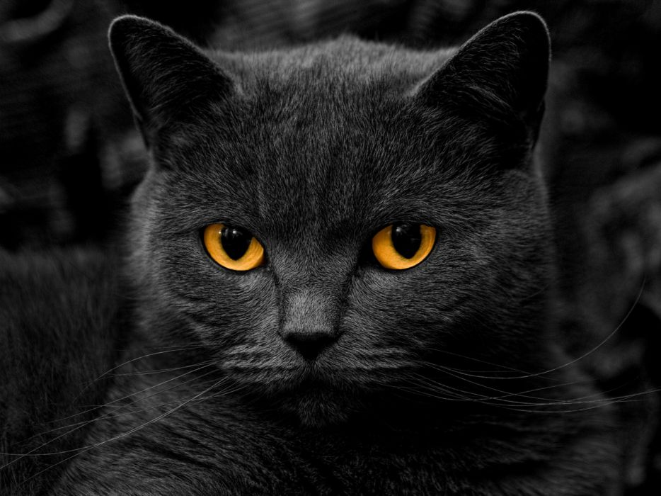 Eyes dark cats grayscale monochrome kittens selective coloring wallpaper