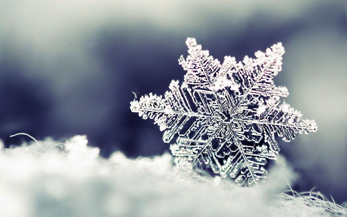 Nature snowflakes wallpaper