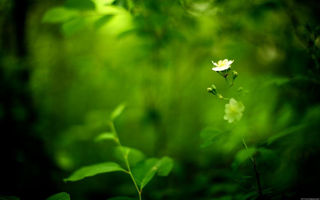 Green nature flowers wallpaper