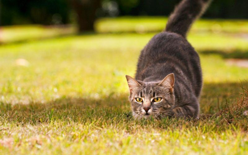 Nature cats grass grey outdoors wallpaper