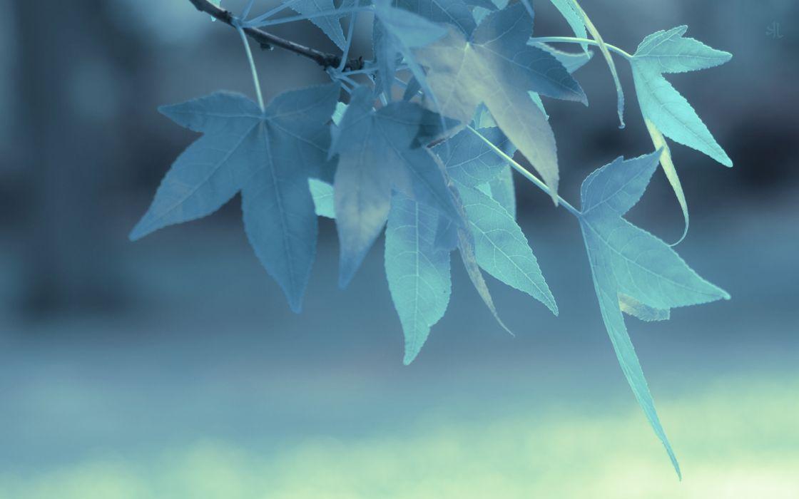 Blue leaves depth of field wallpaper