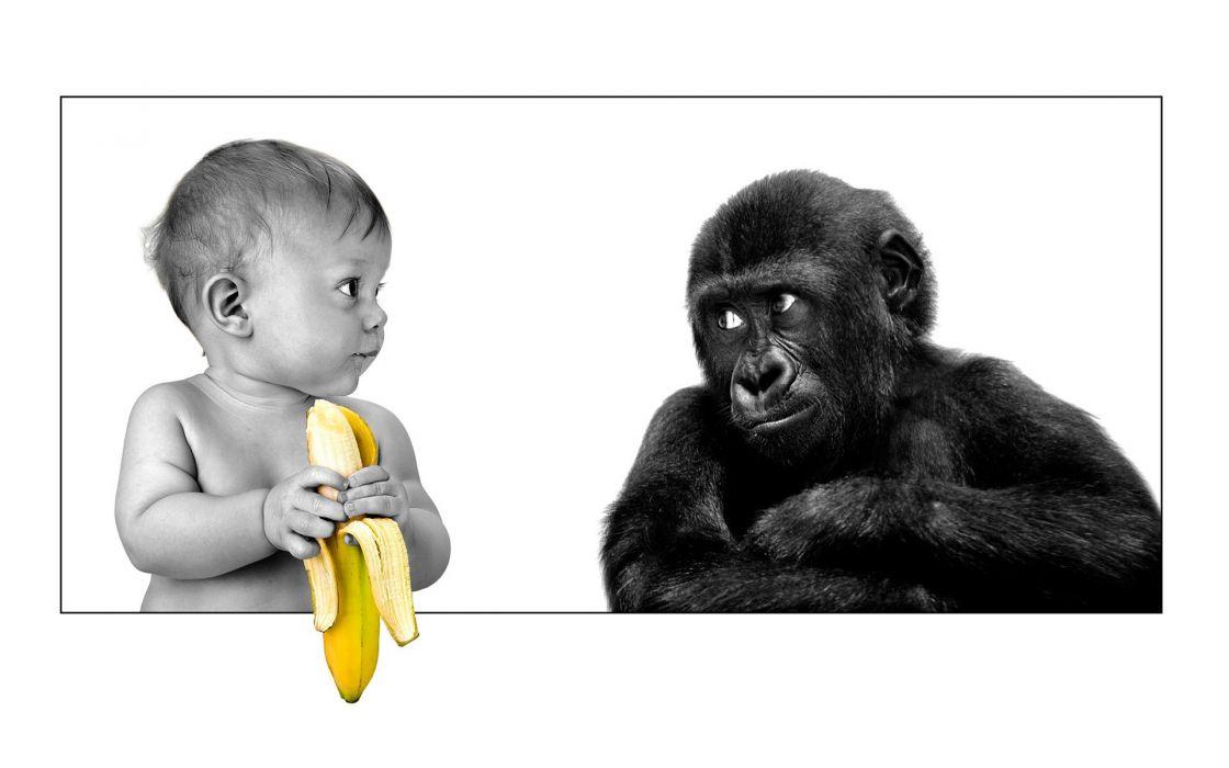 Baby funny bananas monkeys wallpaper