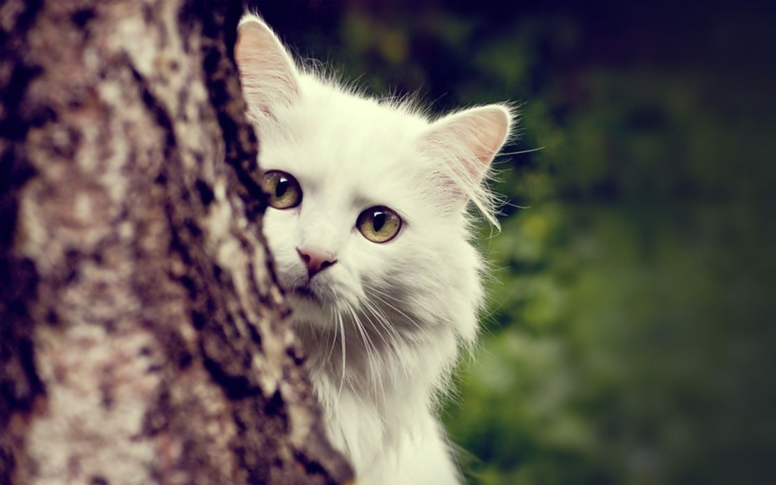 Cats animals tree trunk wallpaper