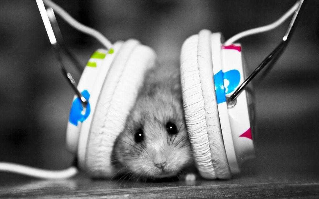 Headphones music animals hamsters selective coloring wallpaper ...