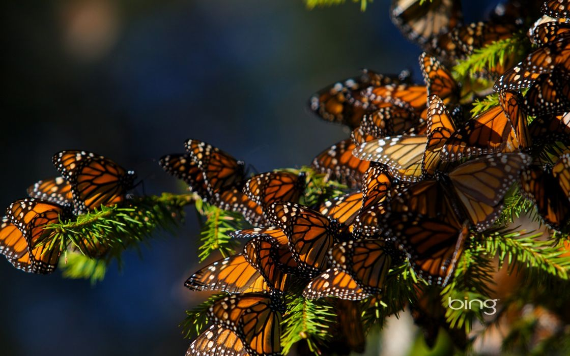Nature butterfly bugs wallpaper