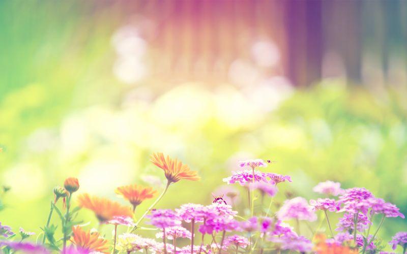 Flowers spring bumblebee bright bombus wallpaper
