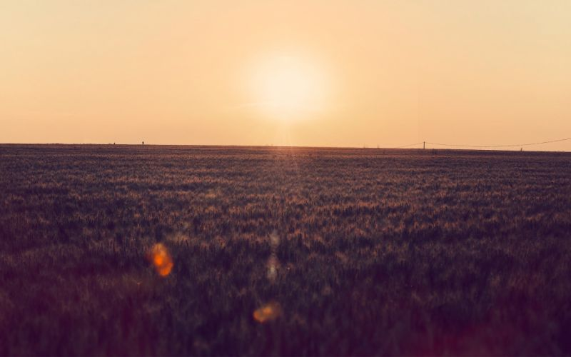 Sunset nature sun grass wallpaper