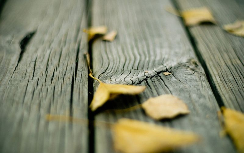 Wood leaves fallen leaves wallpaper