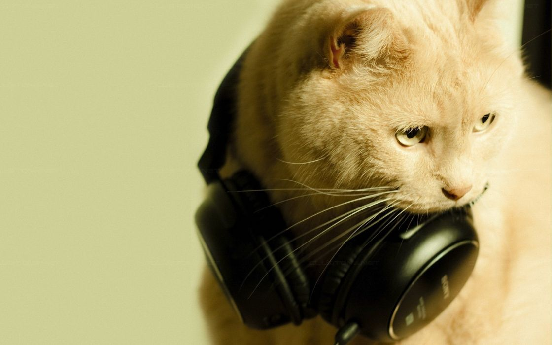 Headphones cats animals wallpaper