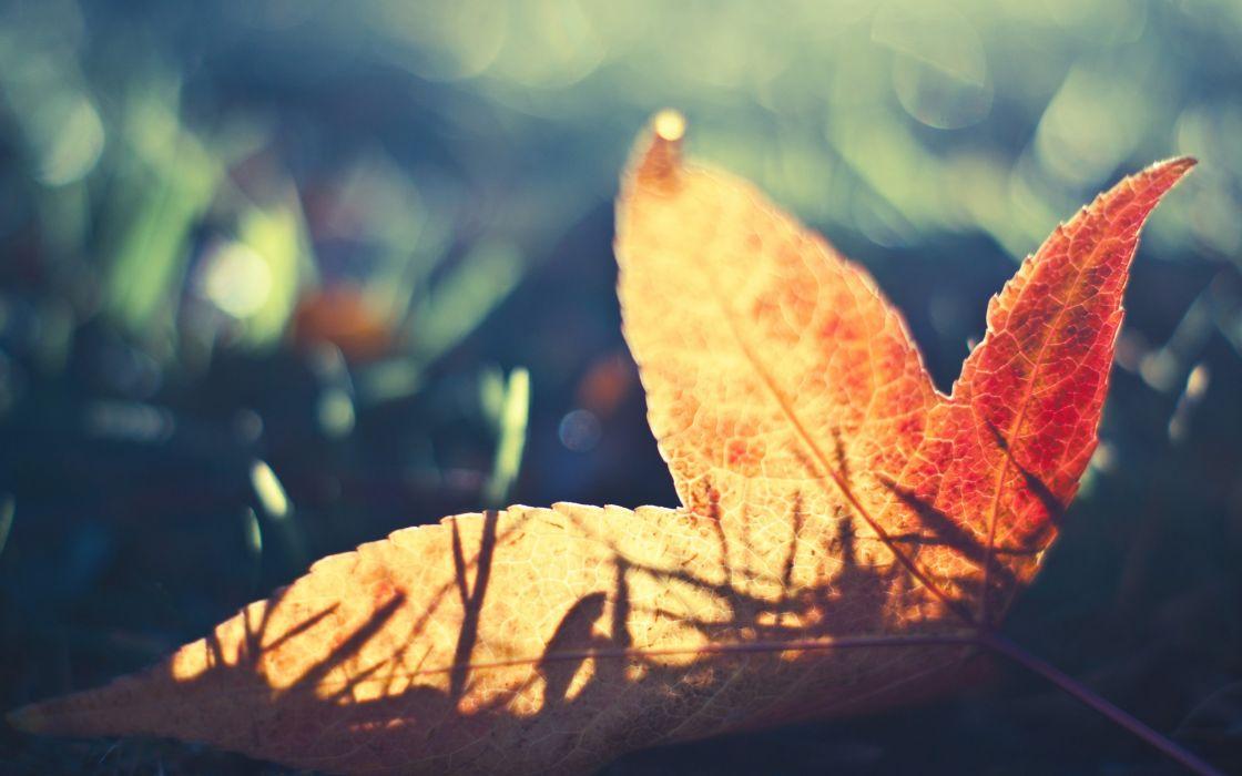 Nature leaf leaves macro fallen leaves wallpaper