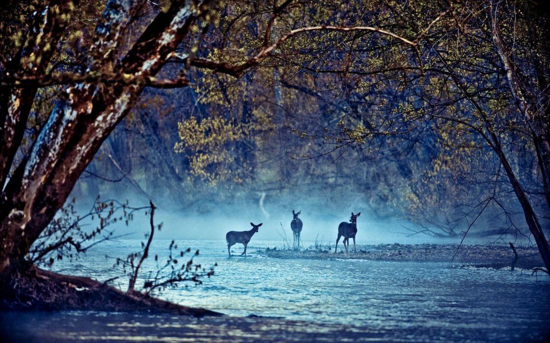 Landscapes nature trees animals deer rivers wallpaper