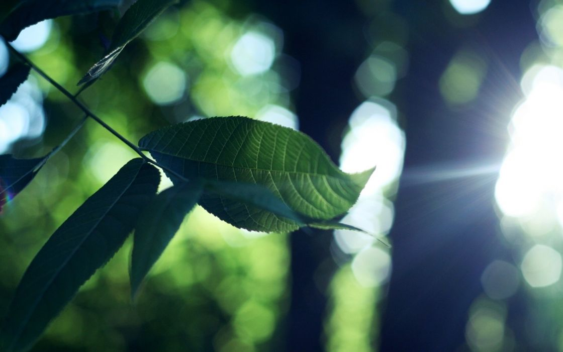 Nature leaves plants wallpaper