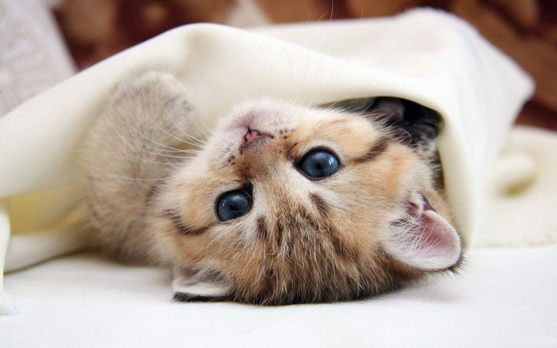 Eyes cats animals kittens pets wallpaper