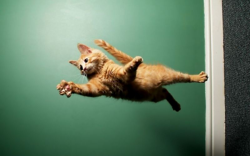 Cats animals fly wallpaper