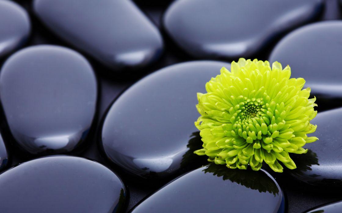 Flowers stones zen wallpaper