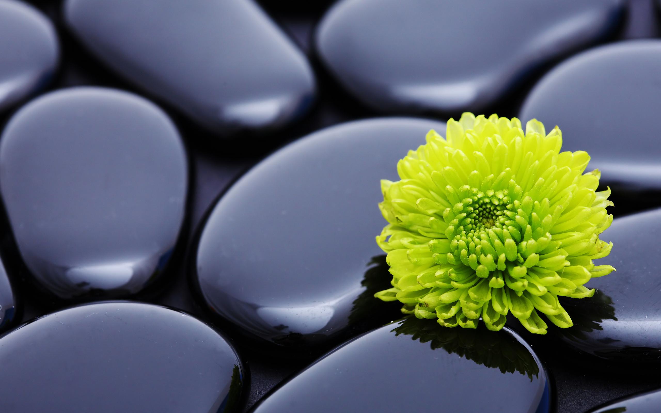 flowers stones zen wallpaper 2560x1600 9229 wallpaperup. Black Bedroom Furniture Sets. Home Design Ideas