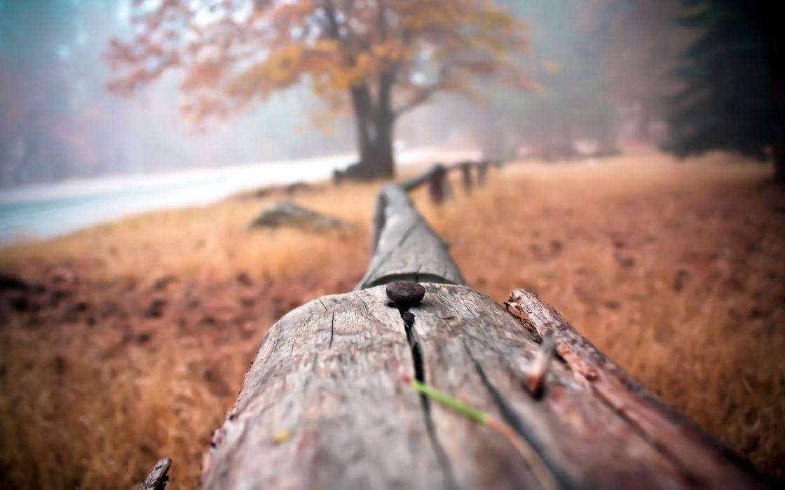 Nature trees fences wood wallpaper