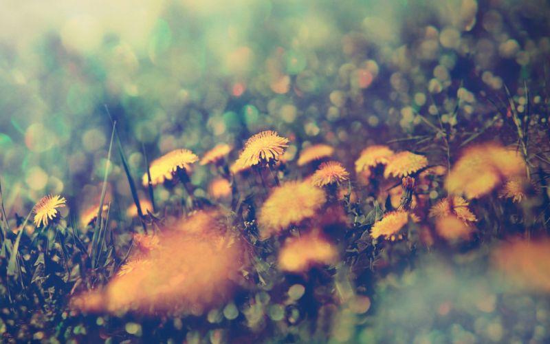 Flowers macro depth of field wallpaper