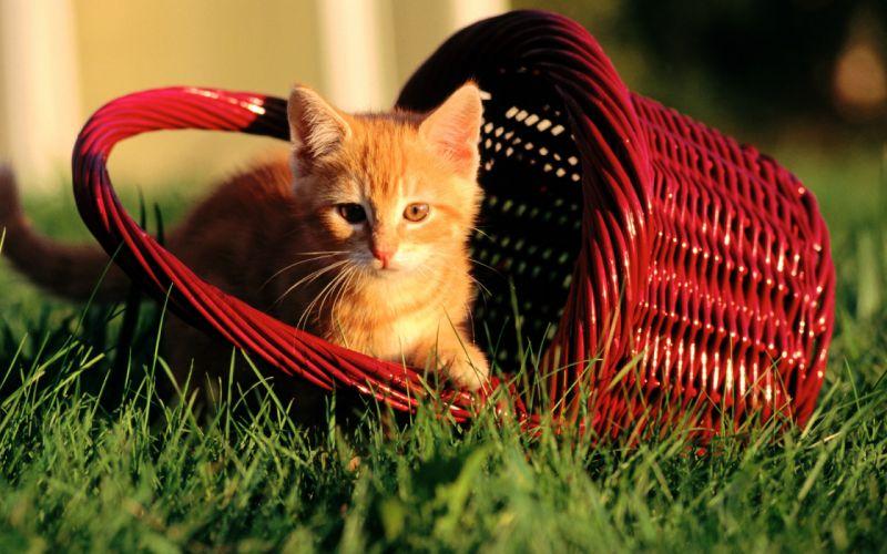Cats animals grass kittens baskets wallpaper