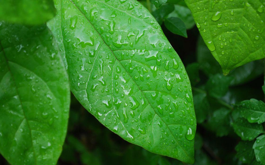 Green nature leaves wet plants water drops macro wallpaper