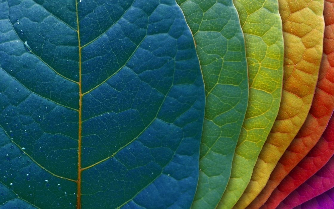 Multicolor leaves spectrum creative wallpaper