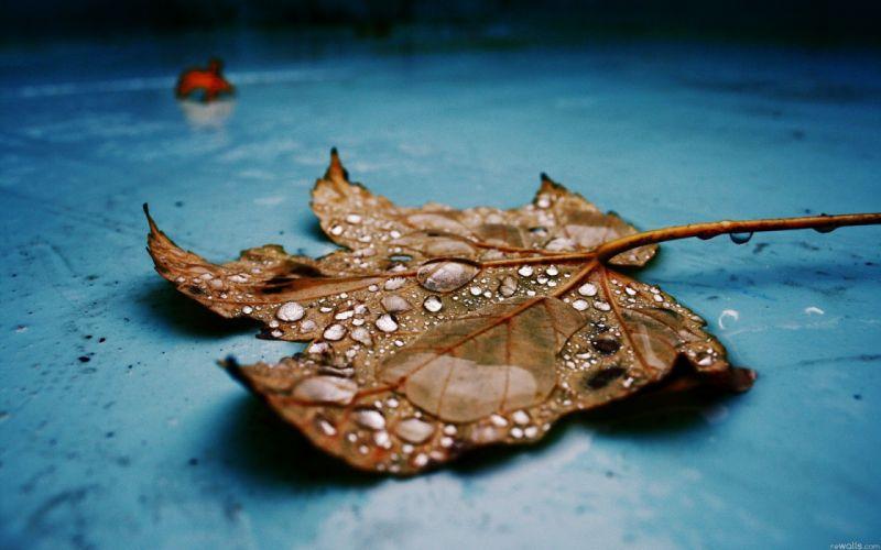 Nature leaves water drops fallen leaves wallpaper