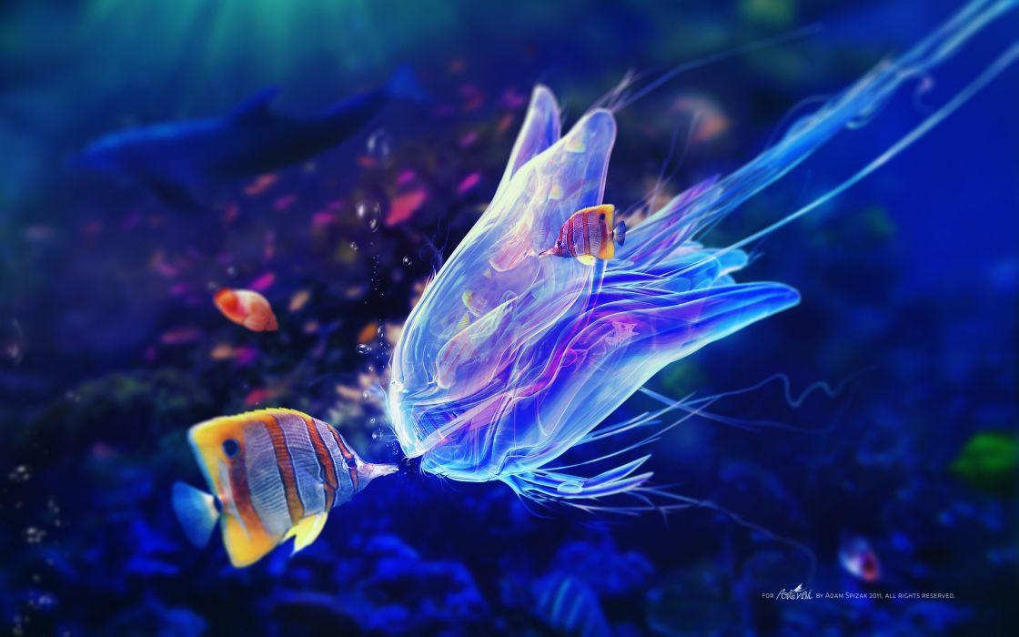 Blue fish jellyfish artwork underwater adam spizak wallpaper