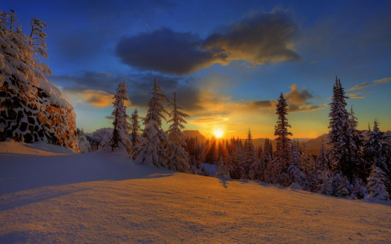 Sunset winter forest wallpaper