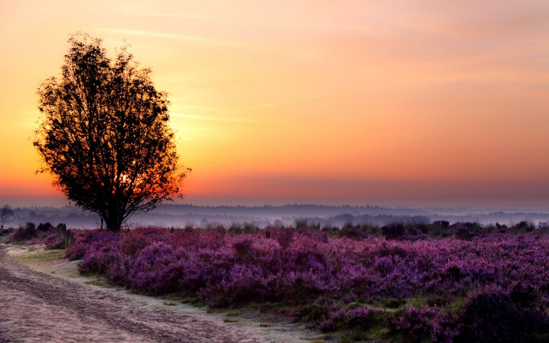 Landscapes trees flowers wallpaper