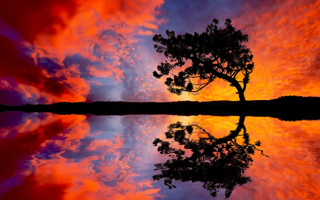Landscapes trees reflections wallpaper