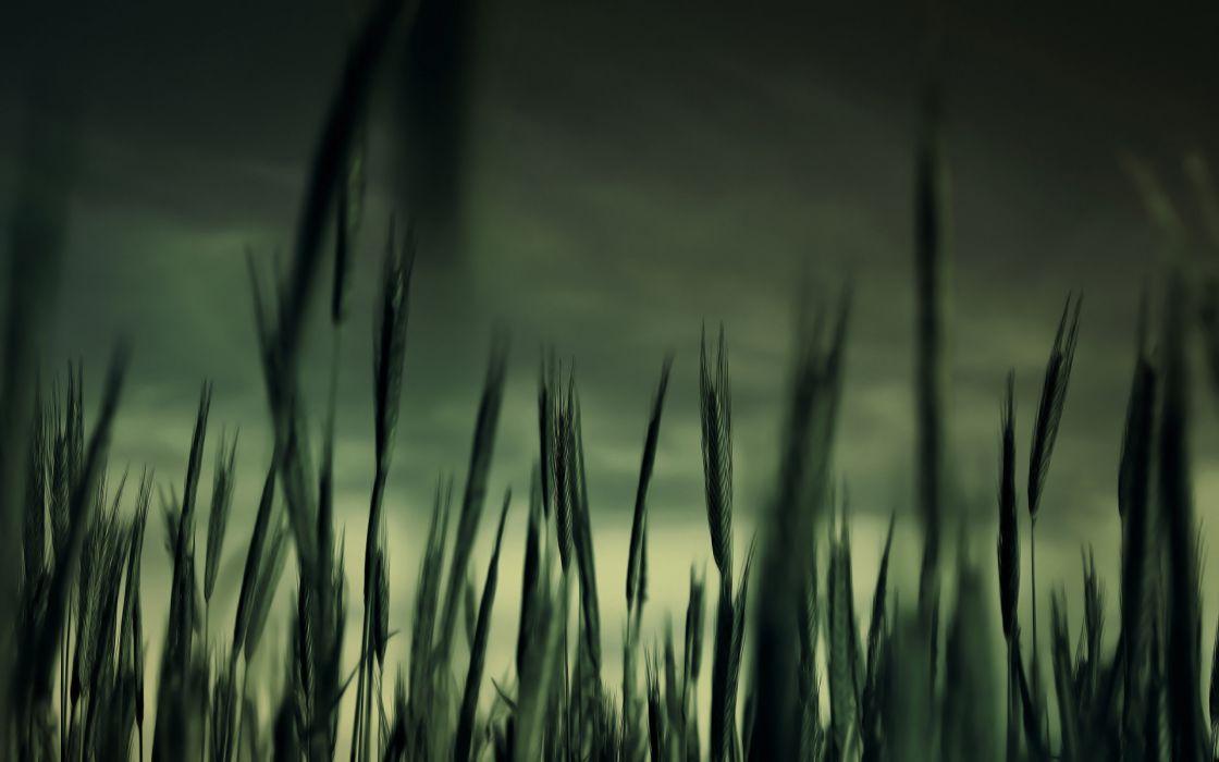 Nature dark fields plants wallpaper