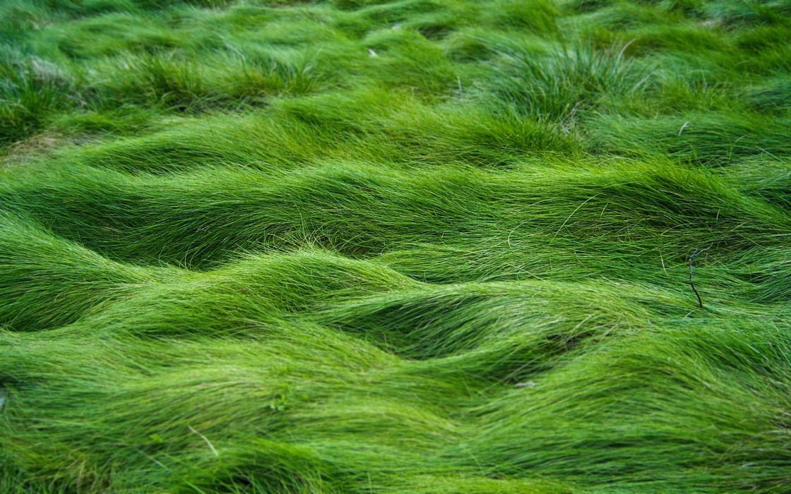 Sea grass wallpaper