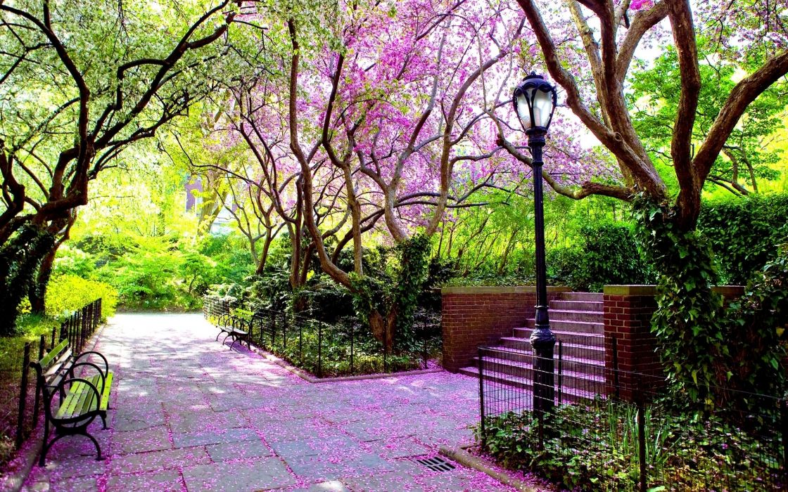 Nature trees pink stairways bench scenic lamp posts hdr photography wallpaper
