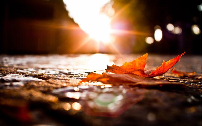 Nature leaves sunlight macro wallpaper