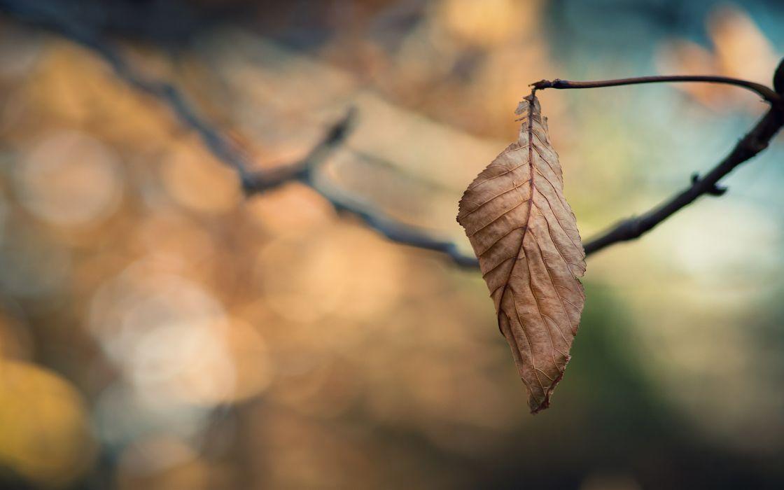 Closeup nature autumn leaves macro depth of field wallpaper