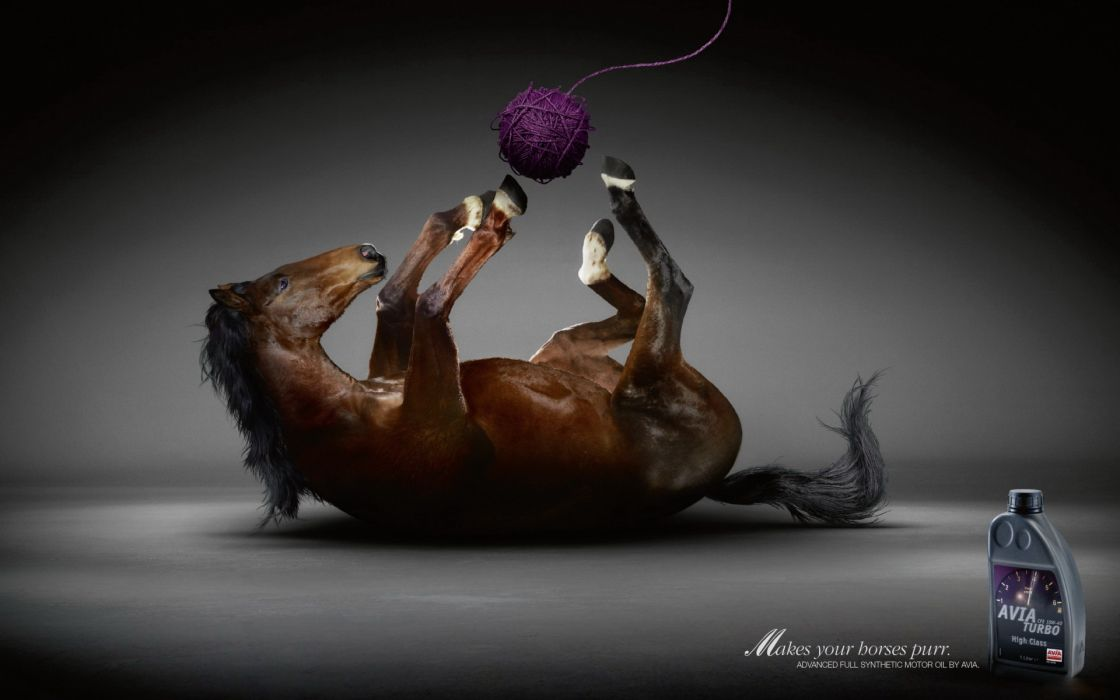 Funny horses creative advertisement wallpaper