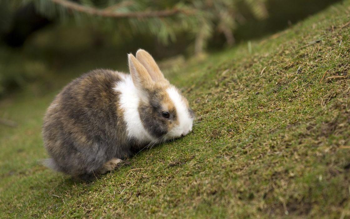 Green animals rabbits wallpaper