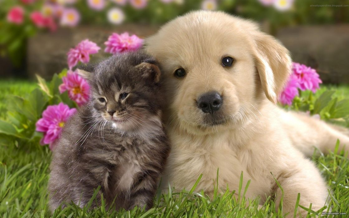 Cats animals dogs friendship wallpaper